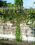 Backsteinmauerkriechpflanzenanlagen Stockfotos