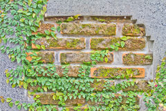 Backsteinmauern Stockbild