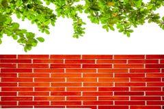 Backsteinmauern und Bäume Stockfotografie
