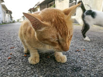 Backstreet Cat Images stock