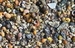 BackThe background with assorted shells and stones at sea shore Stock Photos