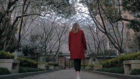 Backview του ελκυστικού ξανθού κοριτσιού σε ένα κόκκινο παλτό που περπατά την αλέα sakura, που απολαμβάνει τη μυρωδιά των ανθίζον απόθεμα βίντεο