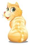 A backview of an orange cat Stock Photos
