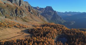 Backward aerial over alpine mountain valley lake and orange larch forest woods in sunny autumn.Alps outdoor colorful stock video footage