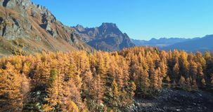 Backward aerial over alpine mountain valley lake and orange larch forest woods in sunny autumn.Alps outdoor colorful stock footage
