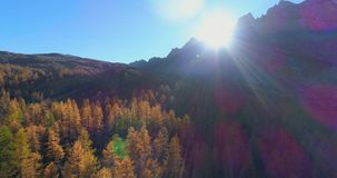 Backward aerial over alpine mountain valley and orange larch forest woods in sunny autumn.Europe Alps outdoor colorful. Backward aerial over alpine mountain
