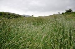Backwash grain fields Stock Photo