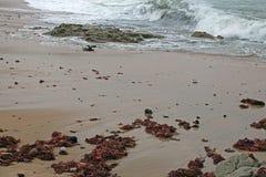BACKWASH NAD gałęzatką NA plaży zdjęcie royalty free