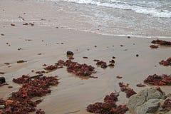 BACKWASH woda NA plaży Z CZERWONĄ gałęzatką zdjęcie stock