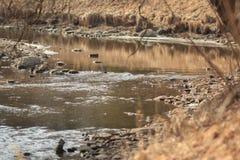 backwater fotografia de stock royalty free
