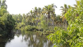 Backwater And Coconut Plantation Topical Landscape. Coconut plantation with backwater and reflection natural by riverside on Poovar Island India Stock Images
