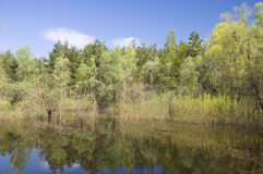 Backwater at the Dnieper river. Ukraine. Backwater at the Dnieper river in spring stock photo