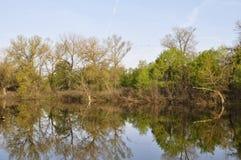 Backwater at the Dnieper river. Spring. Backwater at the Dnieper river with birds flying. Shot in the morning Royalty Free Stock Photos
