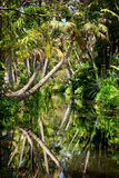 Backwater in jungle Stock Images