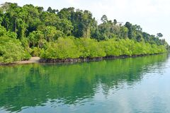 Backwater with Mangrove Forest on Bank with Clear Water - River on Great Andaman Trunk Road, Baratang Island, India. This is a photograph of backwater with stock image