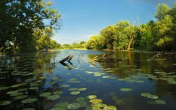 Backwater reflection Royalty Free Stock Image