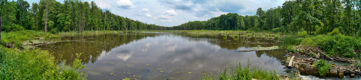 Backwater. River in eastern Poland Stock Images