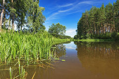 Backwater of the Volga River Royalty Free Stock Images