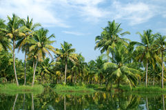 Backwaters of Kerala. Coco-trees and reflection at backwaters of Kerala, India Stock Images