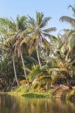 The backwaters kerala Royalty Free Stock Image