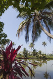 The backwaters kerala Royalty Free Stock Images