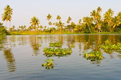 Backwaters in Kerala, India Royalty Free Stock Photo