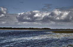 Backwaters at the mouth of the River Warta Royalty Free Stock Images