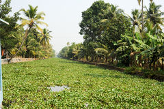 The backwaters near Alleppey Stock Images