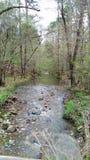 Backwood wiosna zdjęcia stock