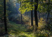 Backwoods landscape, trees, shining through leaves Royalty Free Stock Photography