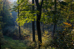 Backwoods landscape, trees, shining through leaves Stock Images
