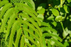 Backyard Bush royalty free stock images