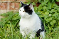 Backyard cat Royalty Free Stock Photography