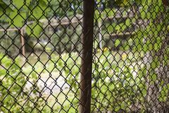 BACKYARD THROUGH CHAIN LINK FENCE. A rusted chain link fence separates two properties royalty free stock images