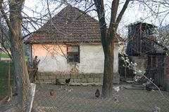 Backyard with chickens. Backyard of an old house with chickens running around royalty free stock image