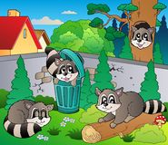 Backyard with cute racoons Stock Photo
