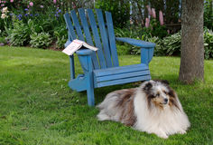 Backyard Dog Royalty Free Stock Photo