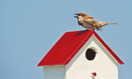 Backyard finch perched on a birdhouse. Stock Images