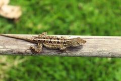 Backyard Friend Stock Images