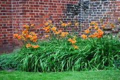 Backyard garden. A view of backyard garden with orange day lilies Stock Image