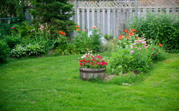 Backyard Garden. A backyard garden with flowers growing around the edge and fence . a larger garden is growing in the middle with plants growing in an old barrel Stock Images