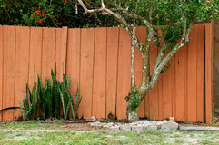 Backyard garden with fruit tree and mother in law tongue Royalty Free Stock Images