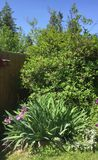 Backyard garden perennials royalty free stock photo