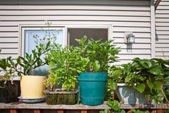 Backyard garden. Small backyard garden on the terrace Royalty Free Stock Photos