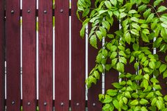 Natural wooden background with green leaves Royalty Free Stock Images
