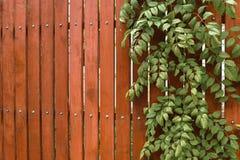 Backyard garden during summer time. Stock Photo