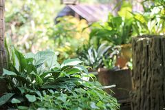Backyard garden in Thailand. royalty free stock photo