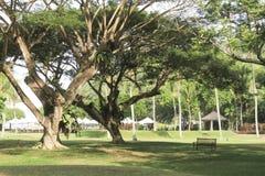 Backyard garden. Trees and grassland of backyard garden Royalty Free Stock Image