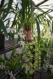 Backyard Greenhouse Stock Image