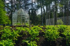 Backyard greenhouse and vegetable garden royalty free stock image